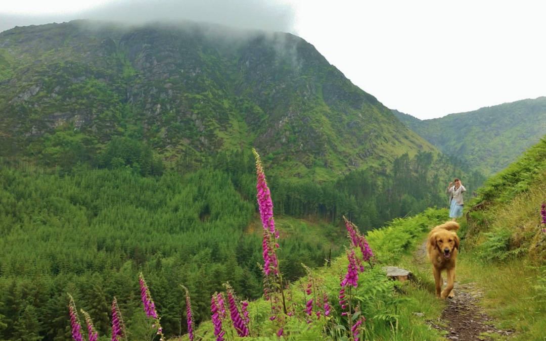 Tips for hiking, mountain-biking or relaxing in Irish forests this summer